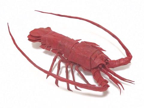 イセエビ / Japanese spiny lobster Lobster Diagram